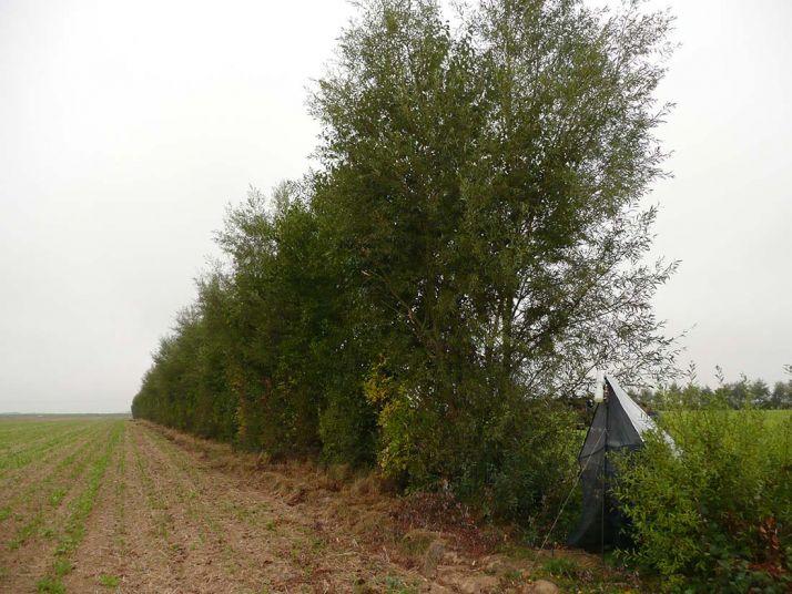 Les infrastructures agroécologique feront très certaiment partie des voies pour accéder à l'éco-régime dans la futture PAC de 2023.