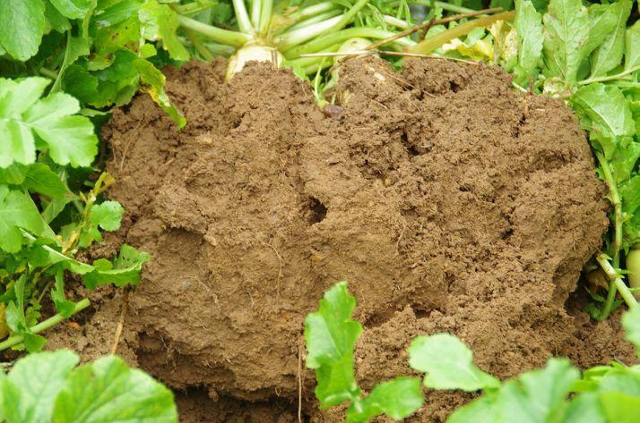 L'indicateur proposé par le projet Sols vivants veut prendre en compte l'ensemble des propriétés physiques, chimiques et biologiques d'un sol.