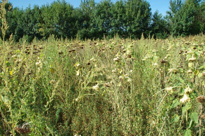 Parmi les 19 indicateurs agroclimatiques, 9 concernent les grandes cultures.