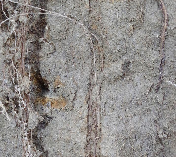 Les racines des plantes  ne fissurent pas le sol. En revanche, elles participent à maintenir la structure créée par la vie biologique du sol ou le travail mécanique.