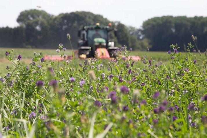 La luzerne, un symbole du développement durable dans l'agriculture.