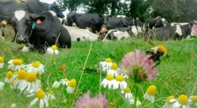 agriculture_bretone_.jpg