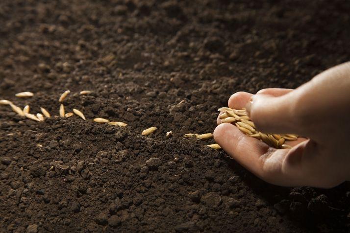 Commercialisation céréales : l'avenir ne se prévoit pas, il se prépare !© Chepko Danil/Fotolia