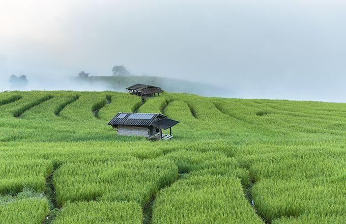 Nuffield : partez à la découverte des agricultures du monde. © Finallast/Fotolia