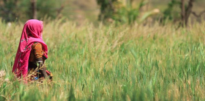 L'Inde est le 2e plus gros producteur mondial de blé derrière la chine. © ozphotoguy/fotolia
