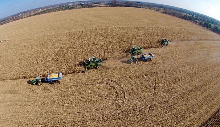 La rotation est simple : soja-maïs ou… monoculture de maïs. Photo : DR