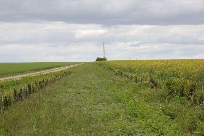 Selon la parcelle, le territoire et la région, les services de contrôle biologique rendus par les ennemis naturels des bioagresseurs fluctuent.