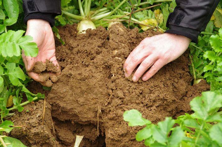 La Sobac, au travers de ses travaux sur le sol, vient de voir sa méthode approuvée dans le cadre du Label bas-carbone.