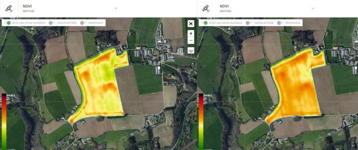 Une fois la zone détectée sur l'image, l'agriculteur peut identifier la source du problème en se déplaçant sur la parcelle. Ici, la détection d'un foyer de mildiou sur échalote. Crédit Photo : Précifield