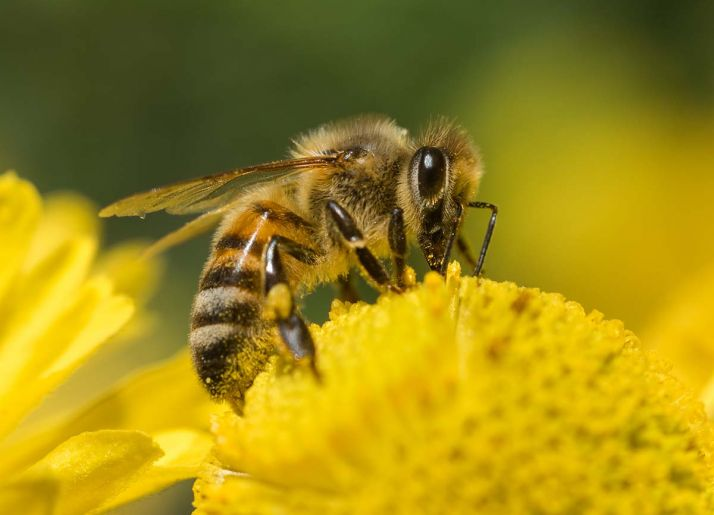 Le Gouvernement souhaite accélérer la mise en place d'actions pour lutter contre le déclin des insectes pollinisateurs.
