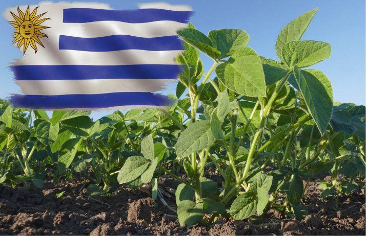 Uruguay : les surfaces de soja peuvent encore augmenter. © Somartin et Sima/Fotolia