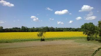 parcelle en agriculture biologique - crédit : AgriBioUnion