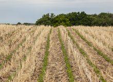 Exploiter et optimiser le potentiel des sols agricoles à séquestrer le carbone. © Bmargaret/Adobe Stock