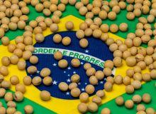 Soja Brésil