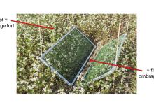 Agroscope a mené des essais pour vérifier si l'ombrage créé par le couvert végétal est la seule explication au moindre développement des adventices. Crédit Photo : Agroscope