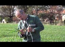 Les tutos de Cathy #2 : Deux nœuds: un stade clef à ne pas négliger sur blé!
