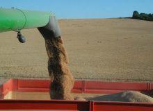 Si les craintes étaient grandes, la récolte de blé s'avère toutefois de qualité respectable.