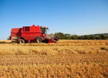 Une récolte française dégradée qui alimente la hausse des cours.