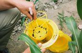 Spinosad : bientôt un granulé insecticide étiqueté « biocontrôle » ? © S.Simonin/Pixel image