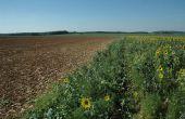 La pratique des couverts végétaux en interculture est celle affichant le plus gros potentiel de performance de stockage additionnel de carbone dans les sols agricoles, devant l'agroforesterie. Photo :Pixe6TM