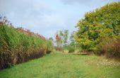 Le miscanthus et le sorgho seront les grands bénéficiaires du projet Biomass for the futur. Photo : Mathieu Lecourtier/Média&Agriculture