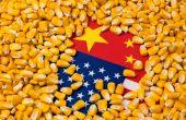 Quelle stratégie la Chine va-t-elle adopter pour ses approvisionnements en maïs ?