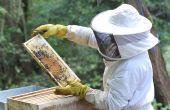 Une année catastrophique pour les apiculteurs, le colza à la rescousse.