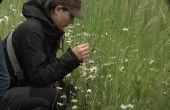 Le réseau Agrifaune a mis en place un plan de gestion communal pour gérer au mieux les bords de champs