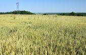Pour faire face à la problématique d'adventices, Stéphane Rabot combine différents leviers agronomiques (allongement des rotations, diversification des cultures, travail du sol…).