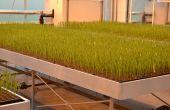 L'objectif est d'optimiser la production de semences hybrides de céréales.