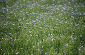 Les variétés de lin oléagineux sont dans myVar®. © Terres Inovia