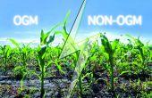 Le Parlement européen a voté en faveur d'un projet de loi qui renforce le pouvoir des États membres à interdire la culture des OGM.