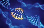 Biotechnologies :des mesures de sauvegarde pour les semenciers européens.© Nobeastsofierce/Fotolia