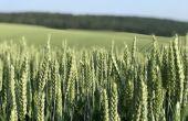 Le bore est étroitement lié au calcium dans le métabolisme de formation de la paroi cellulaire des plantes.