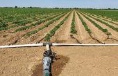 Les producteurs de pommes de terre s'intéressent de plus en plus à la micro-irrigation.