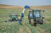 La récolteuse Alliatec, créée par Jean Knibbe, peut récolter jusqu'à six hectares d'oignons porte-graines sur une journée. © A. Lambert/Pixel Image