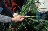 Inatreq™ active, la nouvelle solution de protection fongicide pour le blé