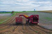 Une récolte de pommes de terre attendue en baisse.